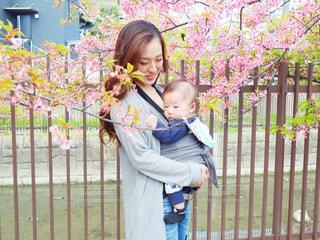 女性,子ども,家族,2人,花,桜,屋外,親子,サクラ,人,フェンス,赤ちゃん,河津桜,さくら,少し,淀水路