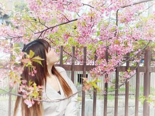 女性,1人,花,桜,ロングヘア,京都,ピンク,ワンピース,花見,サクラ,樹木,お花見,フェンス,河津桜,さくら,淀水路
