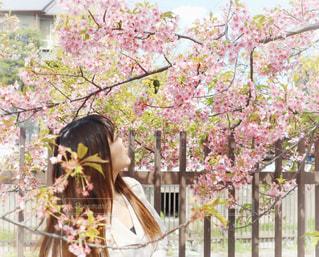 女性,1人,花,春,桜,ロングヘア,花見,サクラ,樹木,お花見,河津桜,さくら