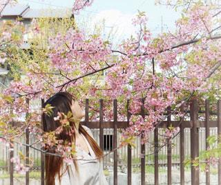 女性,1人,花,春,桜,ロングヘア,ワンピース,花見,サクラ,お花見,河津桜,さくら,ブロッサム,淀水路