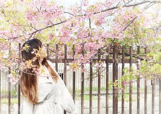 女性,1人,花,春,桜,屋外,ピンク,ワンピース,花見,サクラ,樹木,お花見,河津桜,さくら,淀水路