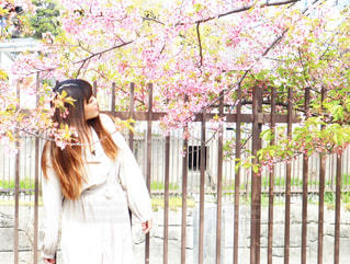 女性,1人,花,桜,ロングヘア,京都,ピンク,ワンピース,サクラ,樹木,ポートレート,河津桜,さくら,淀水路