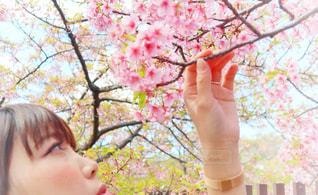 1人,花,春,桜,手,花見,サクラ,手持ち,樹木,人,河津桜,さくら,メ,淀水路
