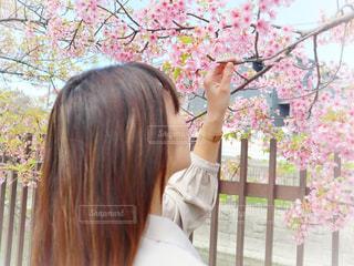 女性,1人,花,春,桜,ロングヘア,花見,サクラ,お花見,人,さくら,淀水路