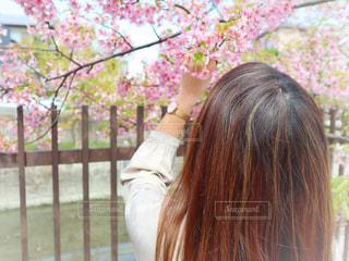女性,1人,花,春,桜,ピンク,花見,サクラ,お花見,人,さくら