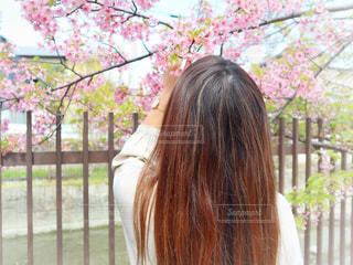 女性,1人,花,桜,ロングヘア,後ろ姿,花見,サクラ,お花見,人,河津桜,さくら,淀水路