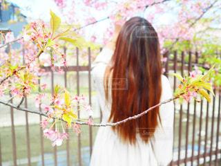 女性,1人,花,春,桜,ロングヘア,ワンピース,花見,サクラ,お花見,河津桜,さくら,淀水路