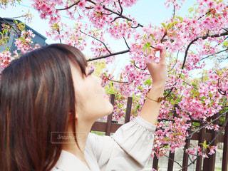 女性,1人,花,春,桜,ピンク,花見,女,サクラ,お花見,さくら