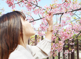 女性,1人,花,春,桜,ロングヘア,花見,サクラ,お花見,さくら,淀水路