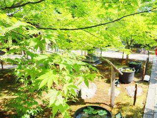 庭のクローズアップの写真・画像素材[3162894]