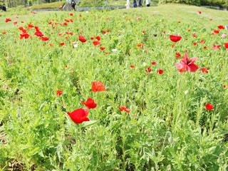 花が緑豊かな畑に立っているの写真・画像素材[3162895]