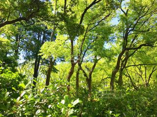 森の中の木の写真・画像素材[3215699]