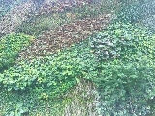 茂みと木のグループの写真・画像素材[3366097]