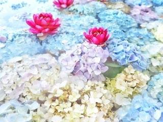 花手水の写真・画像素材[3376079]