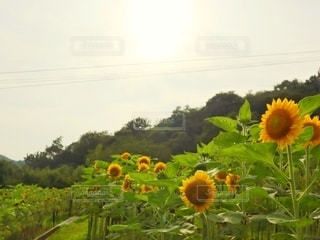 野原の花の写真・画像素材[3514152]
