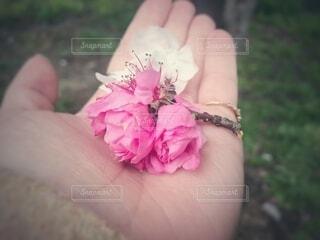 女性,花,桜,屋外,ピンク,手,女,女子,手持ち,人物,人,ポートレート,ライフスタイル,手元,掌