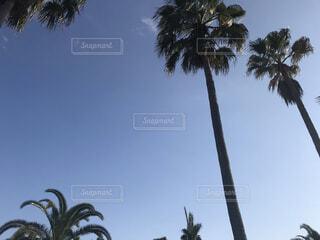椰子の木の写真・画像素材[4131998]