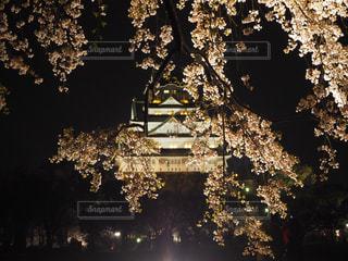 公園,春,桜,屋外,大阪,城,花見,夜桜,お花見,ライトアップ,大阪城,西の丸庭園,観桜ライトアップ