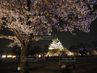 公園,春,桜,屋外,大阪,散歩,城,花見,夜桜,お花見,ライトアップ,大阪城,西の丸庭園,観桜ライトアップ