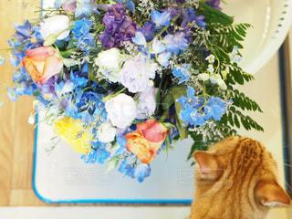 花束と猫の写真・画像素材[1543043]