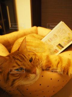 本読んだら眠くなってきたにゃ〜の写真・画像素材[1561343]