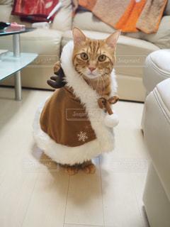 トナカイ猫の写真・画像素材[1671957]