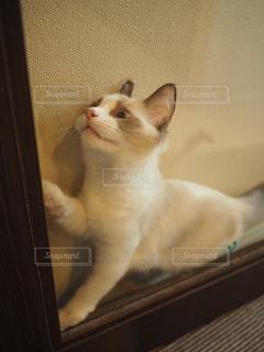勢いあまってはさまる猫の写真・画像素材[1689802]