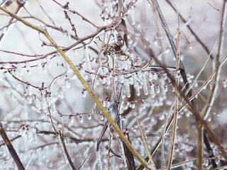 枝に座る鳥の写真・画像素材[2132835]