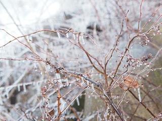自然,冬,水,枝,水滴,水色,氷,樹木,霜,雫,しずく,つらら,福島,草木,氷柱,しぶき,冷,しぶき氷