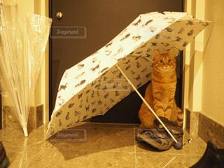 猫,雨,傘,ペット,オシャレ,雫,梅雨,つゆ,ネコ,雨傘