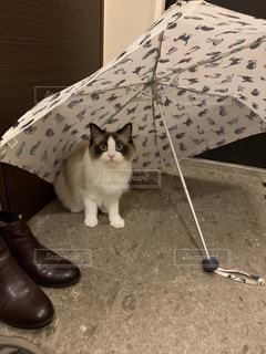 猫,雨,傘,ペット,オシャレ,癒し,雫,梅雨,つゆ,ネコ,雨傘