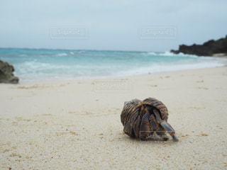 砂浜の上に座っているヤドカリの写真・画像素材[2341053]