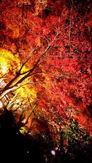秋,紅葉,赤,黄色,観光地,オレンジ,ライトアップ,愛知県,モミジ,瀬戸市,岩屋堂