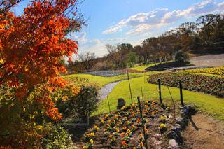 花,紅葉,緑,赤,晴天,紫,オレンジ,外,旅行,天気,愛知県,お出かけ,名古屋市,モミジ,フォトジェニック,東山動植物園,インスタ映え