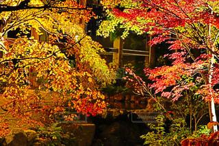自然,秋,紅葉,京都,観光地,ライトアップ,レジャー,11月,相楽郡,水景園,けいはんな記念公園