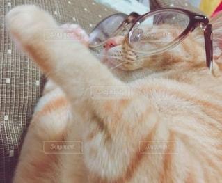 猫,ファッション,動物,アクセサリー,眼鏡,ねこ,子猫,休日,cat,メガネ,休みの日