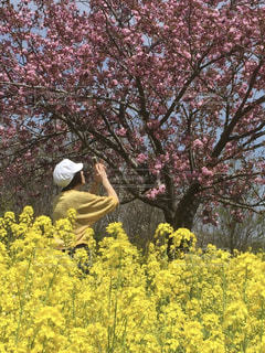 公園,花,春,屋外,後ろ姿,草木,桜の花,さくら