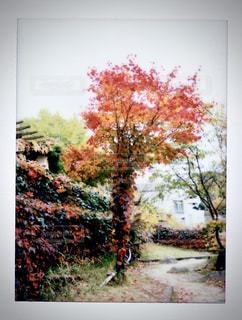 自然,秋,紅葉,森林,カラフル,定山渓