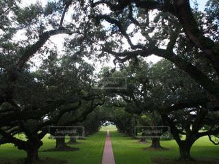 木,緑,アメリカ,観光,道,旅行,USA,アメリカ合衆国,留学,海外旅行,まっすぐ,ニューオリンズ,ニューオーリンズ,New Orleans