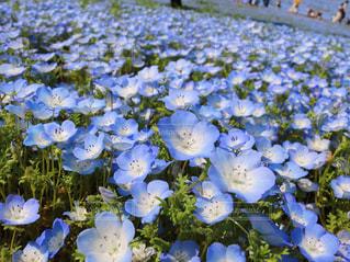 花の写真・画像素材[2042255]