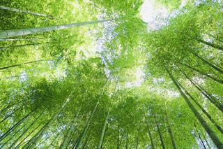 木のクローズアップの写真・画像素材[2267840]