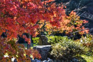 秋,紅葉,福岡,10月,那珂川,グリーンピアなかがわ