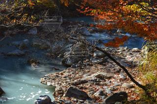 秋,紅葉,宮崎,11月,えびの高原
