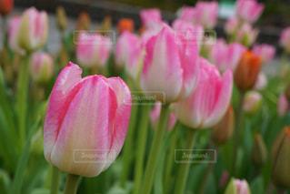 春の訪れの写真・画像素材[1812338]
