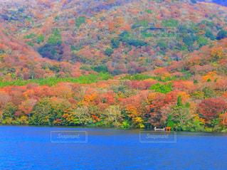 秋,紅葉,湖,カラフル,鳥居,山,旅行,日本,箱根,赤色,芦ノ湖