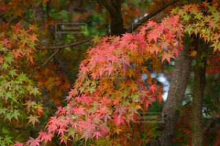 秋,紅葉,景色,昭和記念公園,神奈川県立川市