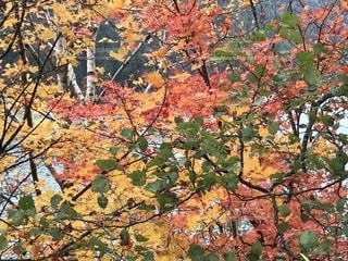 自然,紅葉,屋外,旅行,レジャー・趣味