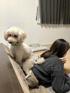 犬と一緒にテーブルに座って人の写真・画像素材[1623049]