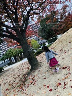 子ども,屋外,樹木,人物,人,幼児