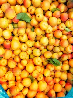 自然,綺麗,黄色,鮮やか,果実,イエロー,カラー,色,黄,yellow,colour